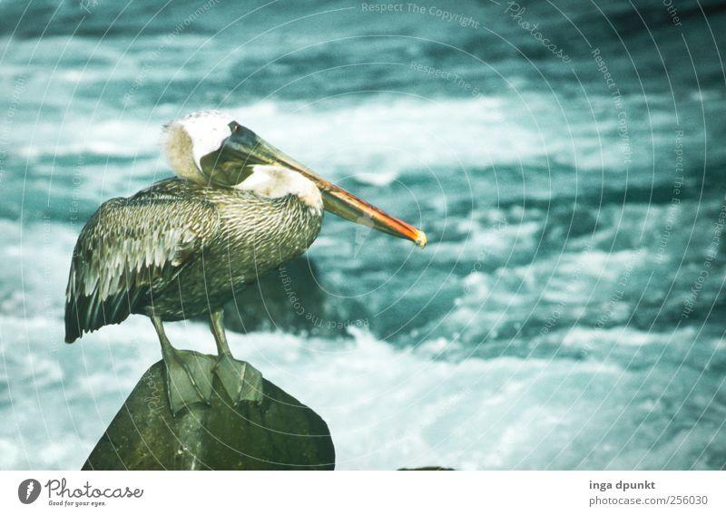Fischfänger Wasser Ferien & Urlaub & Reisen Meer Strand Tier Ferne Umwelt Küste Vogel Wellen Wildtier warten Insel Tourismus Abenteuer beobachten