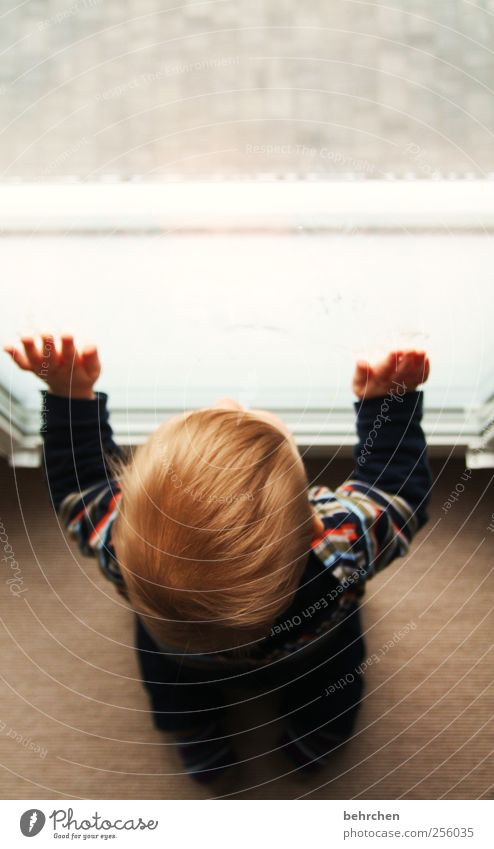 sehnsucht Mensch Kind Baby Kleinkind Junge Eltern Erwachsene Mutter Vater Kopf Haare & Frisuren Hand Finger 1 0-12 Monate Zufriedenheit Vertrauen Sicherheit