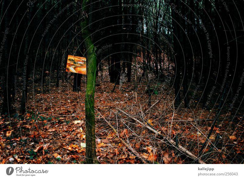 6. türchen Natur Baum Pflanze Blatt ruhig Einsamkeit Haus Wald Herbst kalt Umwelt Landschaft Wärme Bild Italien Gemälde