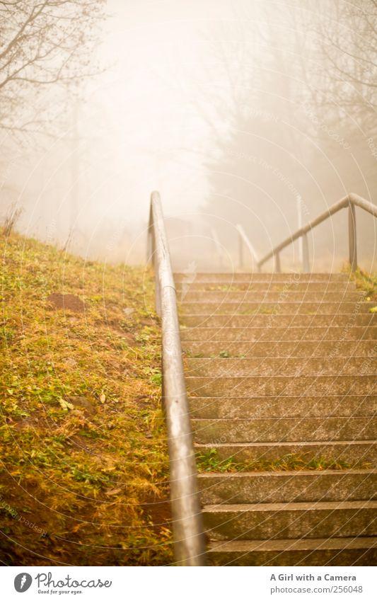 up! Natur Baum Winter Herbst Landschaft Gras Nebel hoch Treppe Hügel Treppengeländer steil schlechtes Wetter Steintreppe