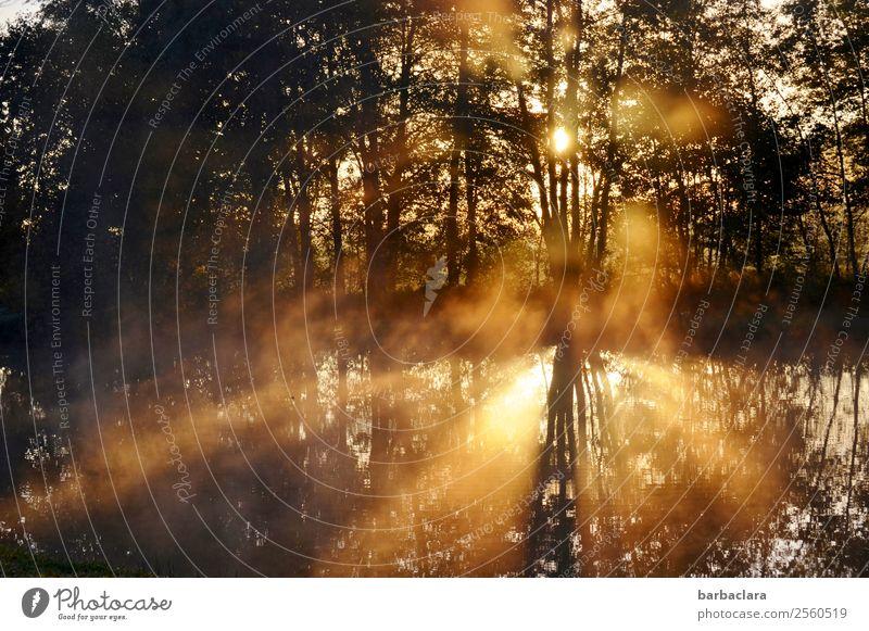 700 l Sonnenaufgang am See Urelemente Wasser Schönes Wetter Baum Wald Seeufer leuchten außergewöhnlich fantastisch hell Wärme gold Gefühle Stimmung Lebensfreude
