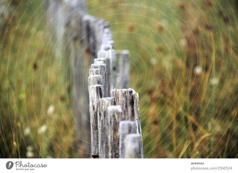 Holzzaun in den Dünen Natur Sommer Pflanze grün Landschaft ruhig Küste grau Stimmung Europa ästhetisch Trauer Frankreich Zaun Bretagne