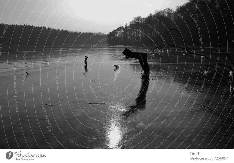 Wintersee Umwelt Natur Landschaft Pflanze Wasser Eis Frost Baum Seeufer Einsamkeit Schwarzweißfoto Außenaufnahme Menschenleer Abend Dämmerung