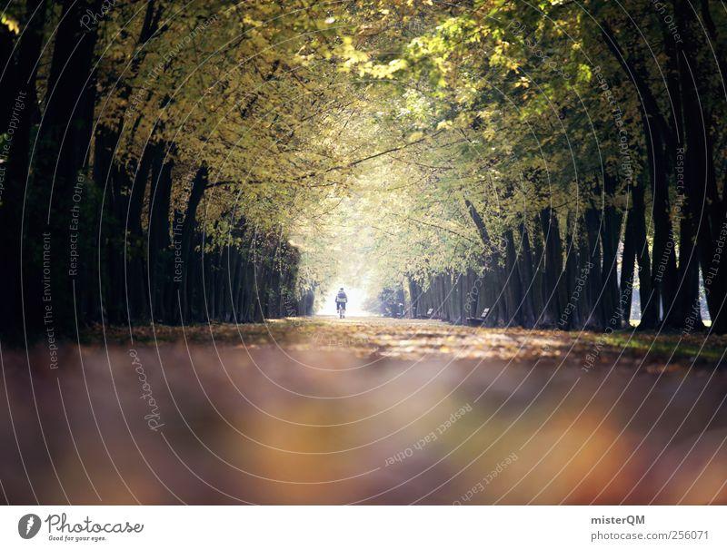 Herbsttyp. Baum Straße Park Kunst ästhetisch Baumstamm Herbstlaub Allee herbstlich Herbstfärbung Herbstbeginn Herbstwetter Herbstwald Nebensaison