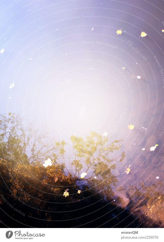 Herbstwasser. Himmel Natur Wasser Baum Blatt Herbst Umwelt Kunst Erde ästhetisch Perspektive Idylle Seeufer Flussufer Herbstlaub Teich
