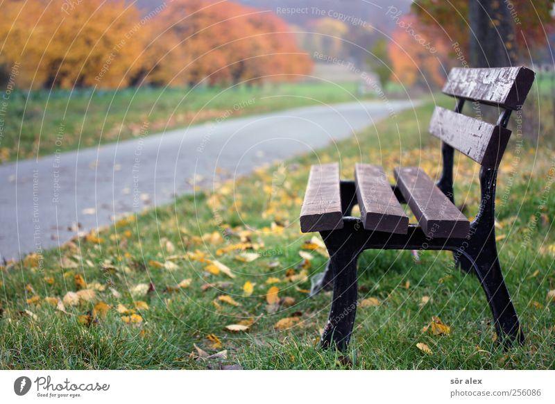Im Herbst Umwelt Natur Pflanze Baum Gras Blatt Herbstlaub Wege & Pfade Fahrradweg Fußweg Asphalt Bank Erholung Spaziergang Spazierweg Pause beruhigend Landleben