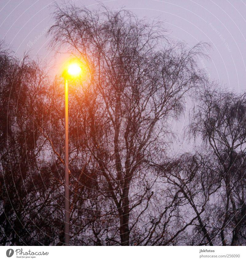 Titellos Umwelt Pflanze Baum ästhetisch kalt Straßenbeleuchtung Licht Energie Beleuchtung Sicherheit Herbst dunkel braun Silhouette Morgen Morgendämmerung Abend