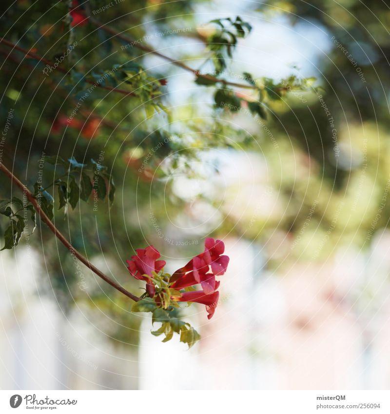Kleinod. Kunst ästhetisch Idylle grün Blume Unschärfe Venedig Schrebergarten Garten Blumentopf Ferien & Urlaub & Reisen Urlaubsstimmung Urlaubsfoto Gasse