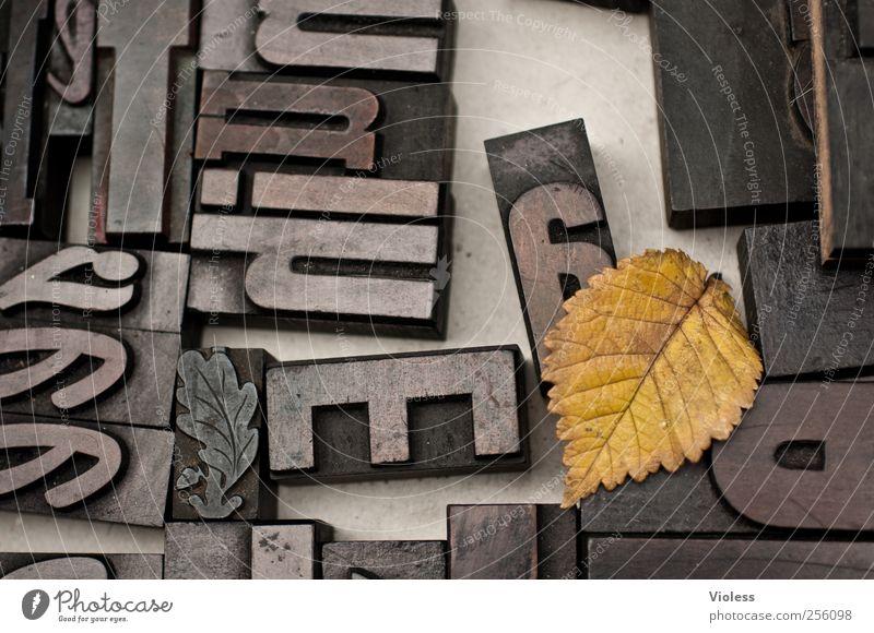 Domino Technik & Technologie Stempel Zeichen Schriftzeichen schwarz Design Letter Text Satzzeichen Druck Gutenberg Druckverfahren Blatt Blattadern Herbst