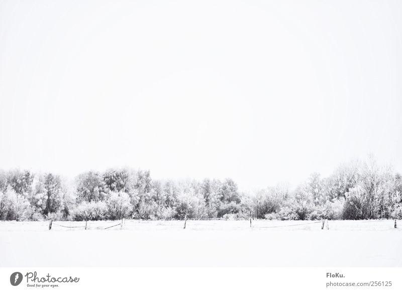verschollen Umwelt Natur Landschaft Wolken Winter schlechtes Wetter Eis Frost Schnee Baum Feld Wald kalt trist weiß Zaun grau minimalistisch Schneelandschaft