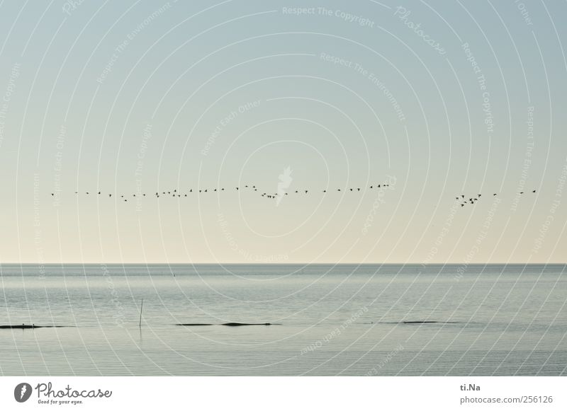 Weltnaturerbe Landschaft Wasser Himmel Wolkenloser Himmel Herbst Schönes Wetter Wattenmeer Nordsee Nordseeküste Wildtier Vogel Tiergruppe Schwarm fliegen warten