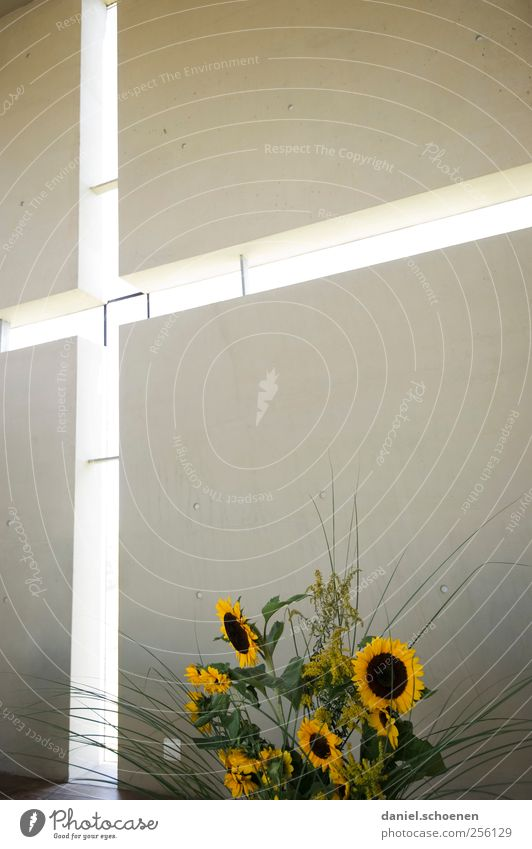 darf für religiöse Zwecke verwendet werden Fenster Wand Religion & Glaube Mauer Innenarchitektur modern Kirche Zeichen Kreuz Blumenstrauß Sonnenblume
