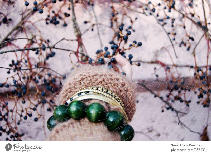 altrosa(3) maskulin Arme Hand Finger 1 Mensch Ast Zweig Beeren Mauer Wand Fassade Mode Strickjacke Accessoire Schmuck Armband Armreif festhalten Farbfoto