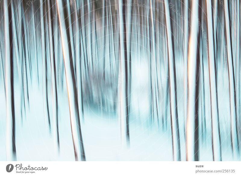 Winterleuchten Natur blau weiß Baum Einsamkeit Landschaft Winter Wald kalt Bewegung Gefühle Schnee Hintergrundbild außergewöhnlich Linie Kunst