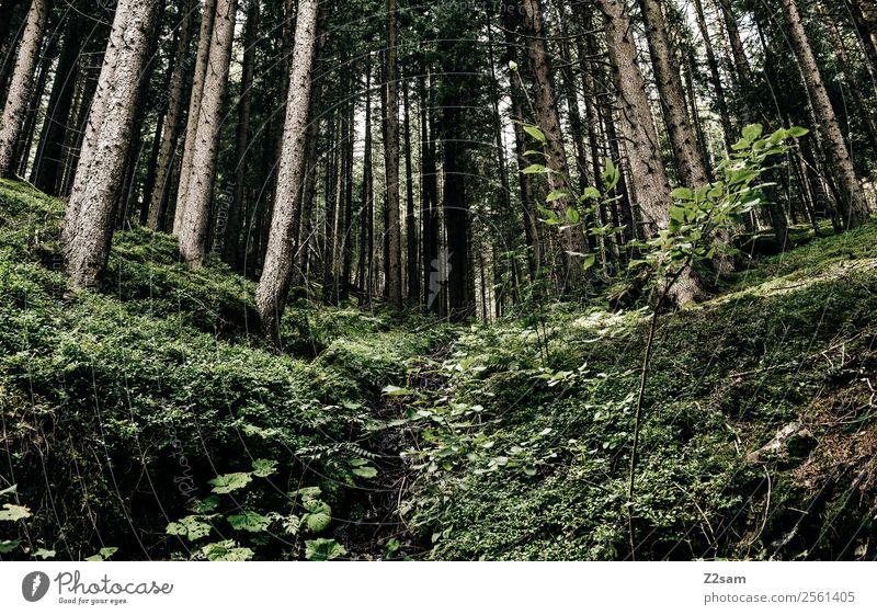 Wald | Berge | Alpen Umwelt Natur Landschaft Pflanze Baum Gras Sträucher Moos frisch nachhaltig natürlich grün ruhig Farbe Gesundheit Idylle Umweltschutz