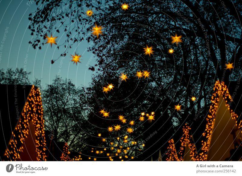 starry, starry night Weihnachten & Advent blau gelb Glück Beleuchtung Design Fröhlichkeit kaufen Lifestyle Stern (Symbol) leuchten Dekoration & Verzierung Freundlichkeit Köln Weihnachtsmarkt
