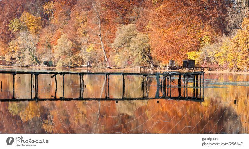Unser Wald soll bunter werden Umwelt Natur Landschaft Sonne Herbst Schönes Wetter Pflanze Baum Küste Seeufer Steg braun mehrfarbig gold Lebensfreude