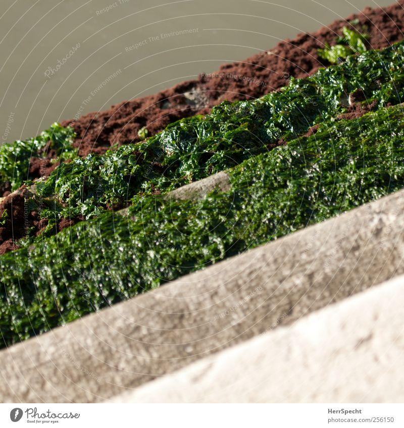 Slippery when wet Wasser Grünpflanze Algen Flussufer Treppe grün Kanal Zugang Glätte Naturwuchs Farbfoto Außenaufnahme Textfreiraum oben Textfreiraum unten
