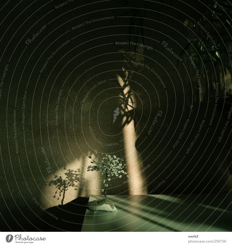 Das singende, klingende Bäumchen Pflanze grün Baum dunkel schwarz Wand Innenarchitektur Stil Mauer klein Kunst Wohnung glänzend Design Raum Häusliches Leben