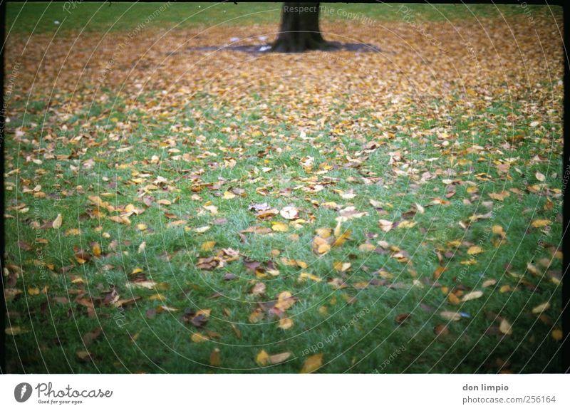 herbst Umwelt Natur Herbst Pflanze Baum Gras Blatt Grünpflanze Park Wiese liegen dehydrieren viele grün Stimmung analog Baumstamm Farbfoto Außenaufnahme