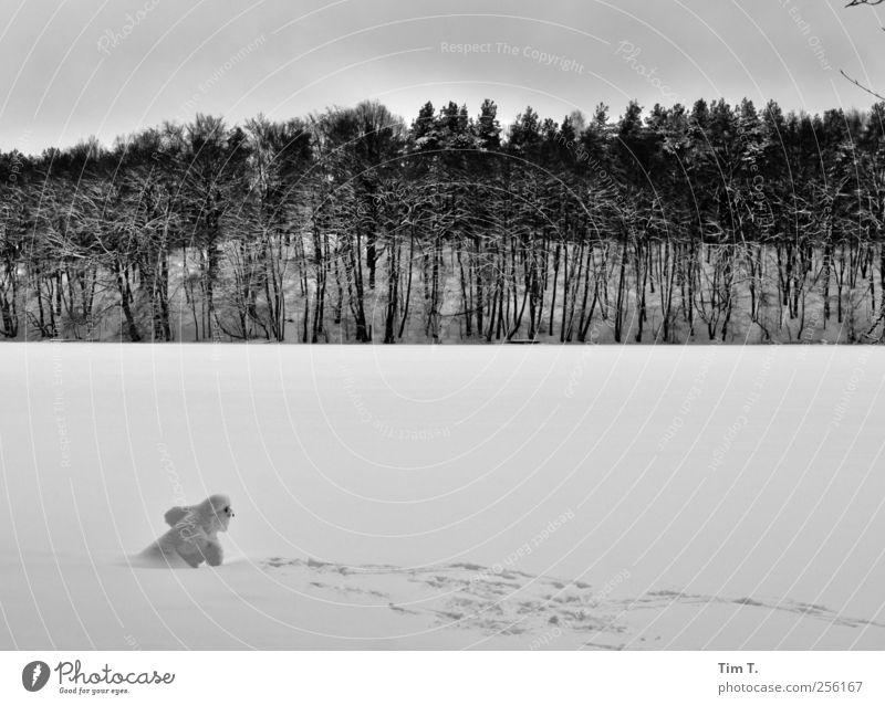 Schneemann Winter Eis Frost Baum Seeufer Liepnitzsee Freude gefroren Wald Schwarzweißfoto Außenaufnahme Abend