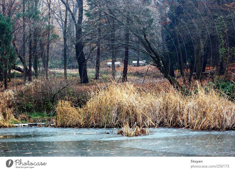 Natur Wasser Baum Pflanze Blatt Wald Erholung Herbst Landschaft Holz Gras Garten Sand Stein Luft See
