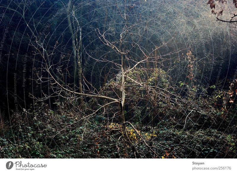 Antenne Umwelt Natur Pflanze Klima Wetter Baum Gras Sträucher Moos Blatt Grünpflanze Garten Park Wiese Wald Sofia Bulgarien Europa Stadtzentrum Holz Blick
