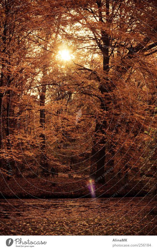 Goldene Zeit Mensch Mann Natur Baum Blatt Erwachsene Wald Herbst Park maskulin Spaziergang Idylle Schönes Wetter Bach