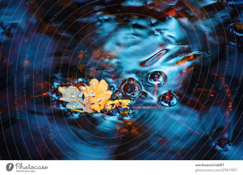 Ablauf der Zeit Spa Umwelt Natur Pflanze Wasser Herbst Blatt See Bach Fluss Wasserfall Bewegung frisch natürlich wild Farbe fließen Vergänglichkeit Entwurf