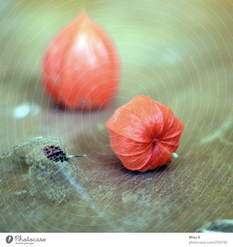 Physalis Lebensmittel Frucht dehydrieren trocken rot Stillleben Holz filigran Farbfoto mehrfarbig Nahaufnahme Strukturen & Formen Menschenleer