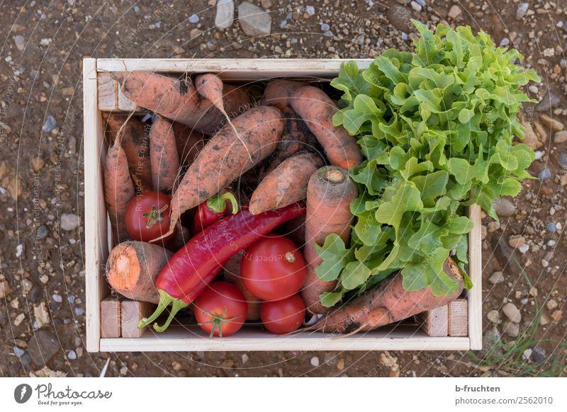Gemüsekiste Gesundheit Lebensmittel Ernährung frisch Erde Landwirtschaft Bauernhof Ernte wählen Bioprodukte Vegetarische Ernährung reif Kasten Markt Vitamin