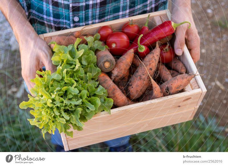 Gemüsekiste tragen Lebensmittel Salat Salatbeilage Bioprodukte Vegetarische Ernährung Gesundheit Gesunde Ernährung Landwirtschaft Forstwirtschaft Mann