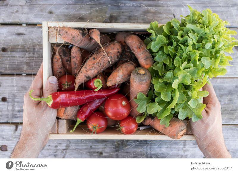 Eine Kiste voll Gemüse Lebensmittel Salat Salatbeilage Bioprodukte Vegetarische Ernährung Gesunde Ernährung Hand Finger Kasten Arbeit & Erwerbstätigkeit wählen