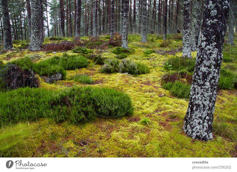 wald Natur Baum Pflanze Sommer Umwelt Landschaft Gras Zufriedenheit ästhetisch außergewöhnlich Sträucher Urelemente Urwald Moos Schottland Highlands