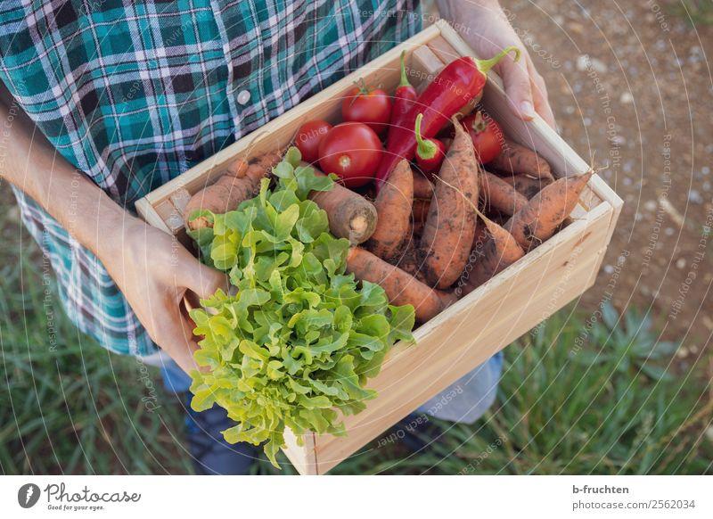 erntefrisches Gemüse Lebensmittel Salat Salatbeilage Bioprodukte Vegetarische Ernährung Gesunde Ernährung Landwirtschaft Forstwirtschaft Mann Erwachsene Hand