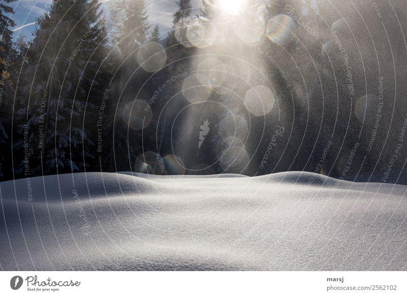 So sanft kann doch nur der Winter ruhig Leben Schnee leuchten rund harmonisch Schneedecke