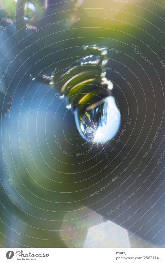 Tropfnasser Kringel Leben harmonisch Erholung ruhig Natur Wassertropfen Pflanze Passionsblume Ranke Pflanzenteile Tropfen tropfend Spirale glänzend hängen