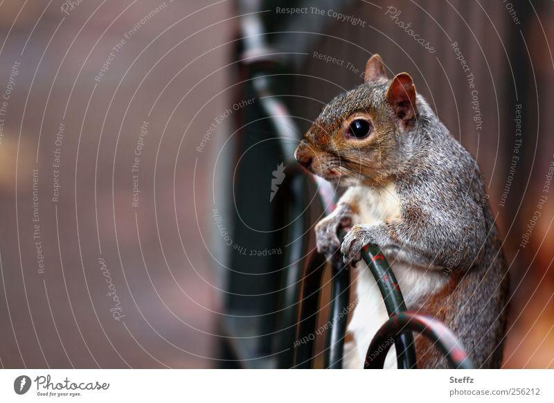 bis dann, ich warte hier.. Natur Tier Auge grau braun Wildtier warten niedlich festhalten Neugier Fell stoppen Zaun Tiergesicht Wachsamkeit sanft