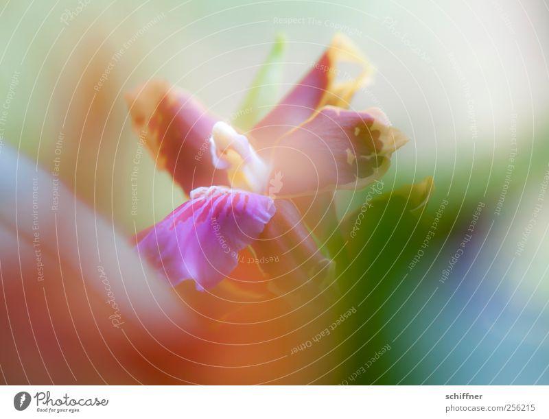 Bisschen Buntes grün rot Pflanze Blume Blatt gelb Blüte rosa violett zart exotisch Orchidee traumhaft Farbenspiel