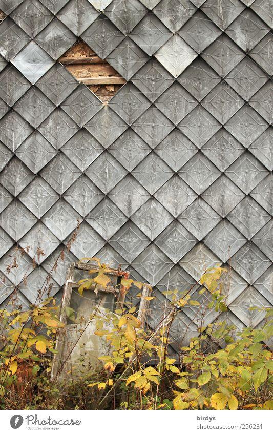 Originelles Original Pflanze Herbst Mauer Wand Fassade warten authentisch historisch kaputt natürlich Gelassenheit ruhig Idylle Symmetrie Verfall