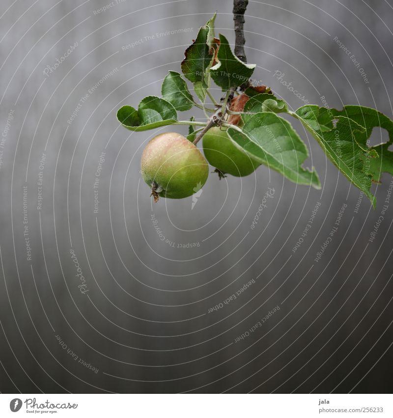 wachstum Lebensmittel Apfel Ernährung Bioprodukte Vegetarische Ernährung Umwelt Natur Pflanze Frühling Baum Grünpflanze Nutzpflanze ästhetisch Gesundheit lecker