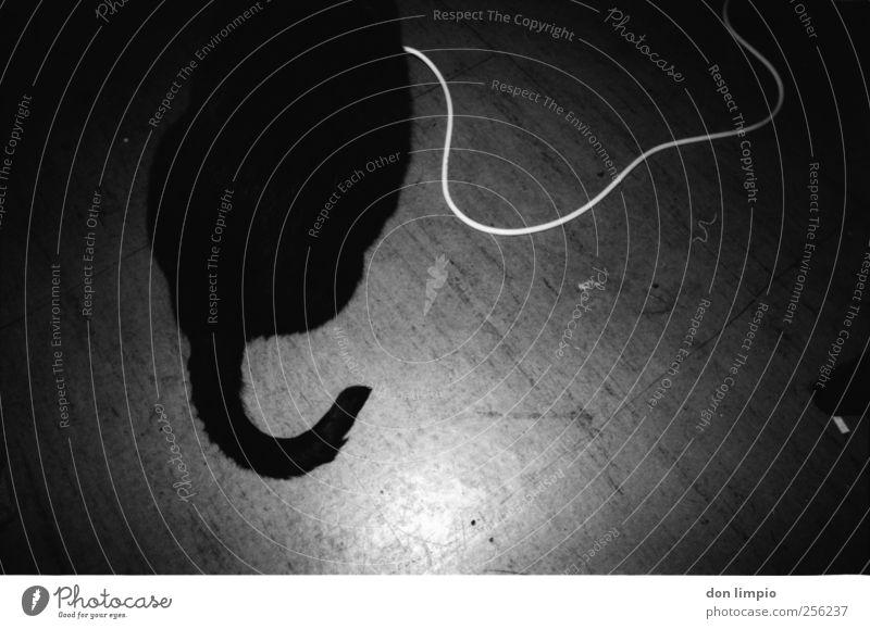 plug and play weiß schwarz Tier Katze liegen Kabel Neugier Fell analog trashig Haustier Schwanz hocken Spielkonsole