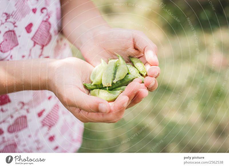 Kinderhand hällt Zuckerschoten Natur Ferien & Urlaub & Reisen Gesunde Ernährung Sommer Sonne Hand Mädchen Wald Lifestyle Leben Herbst Garten Freizeit & Hobby