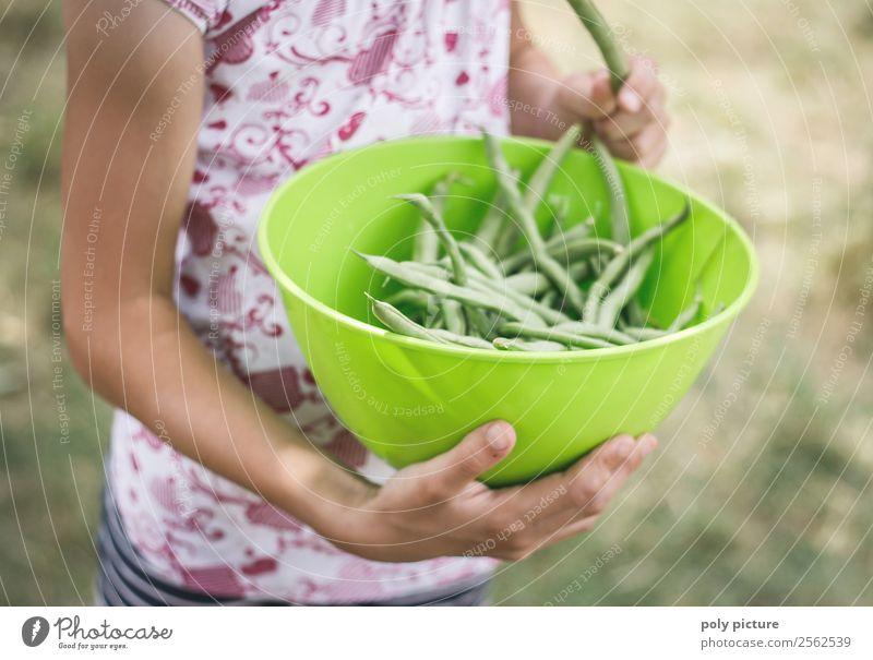 Bohnen-Ernte Kind Natur Jugendliche Gesunde Ernährung Junge Frau Sommer grün Sonne Hand Mädchen Leben Herbst Garten Spielen Freizeit & Hobby