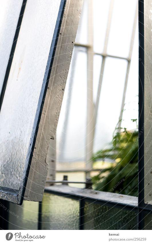 Schräg Gewächshaus Fenster Fensterrahmen Rahmen Glas Metall hell grün weiß offen Neigung Licht Einblick Farbfoto Gedeckte Farben Außenaufnahme Nahaufnahme Tag