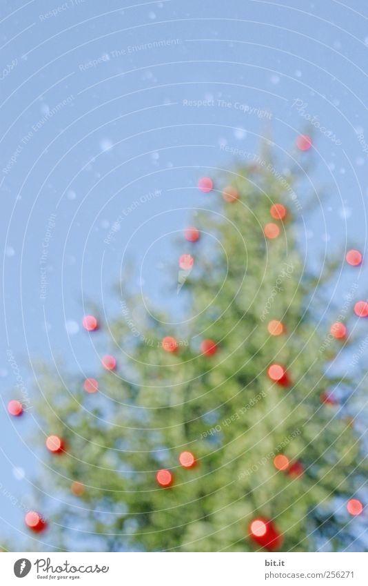 Glühweinbaum... Himmel blau Weihnachten & Advent grün Baum rot Winter Umwelt Schnee Schneefall Eis Feste & Feiern glänzend Frost rund Schönes Wetter