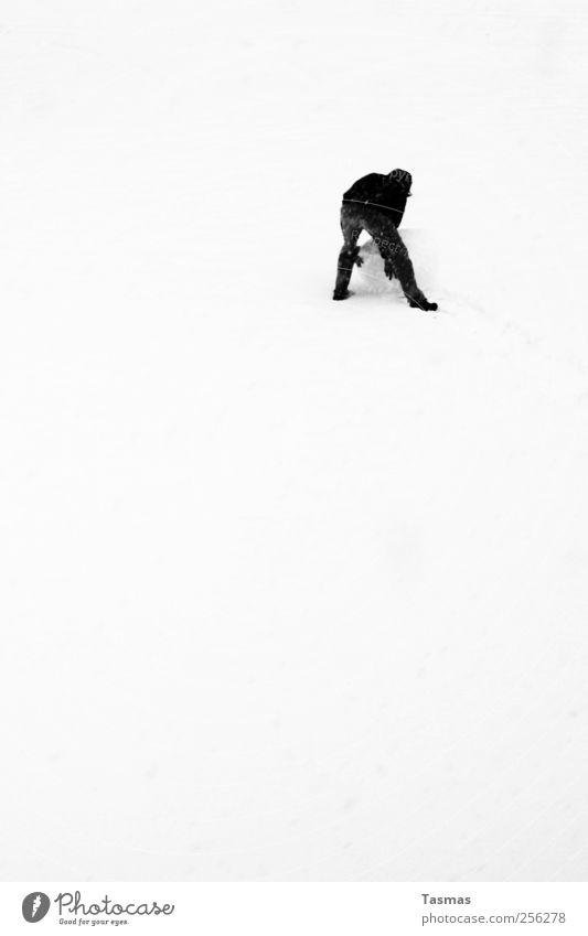 Schneeball Mensch Mann Freude Erwachsene Glück Schneefall Stimmung Wetter maskulin Schönes Wetter Bauwerk bauen Gefühle Schneemann temporär