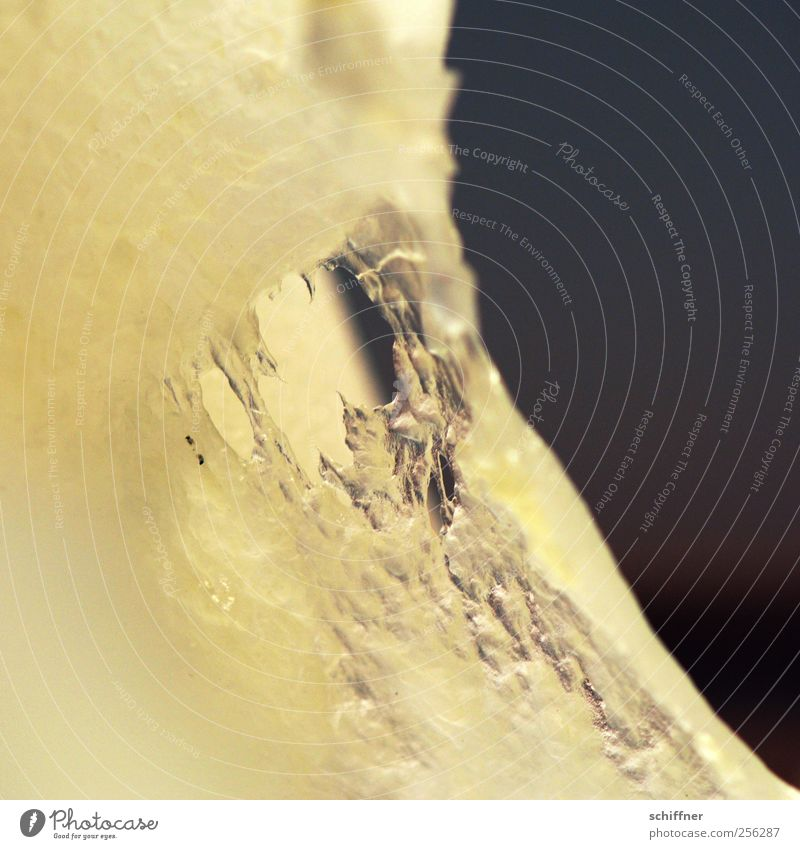 Zerreißprobe Kunst Fressen Aggression Angst Gewalt Zerreißen Maul Mund Zähne zeigen Loch abstrakt Kerze Wachs Innenaufnahme Detailaufnahme Makroaufnahme