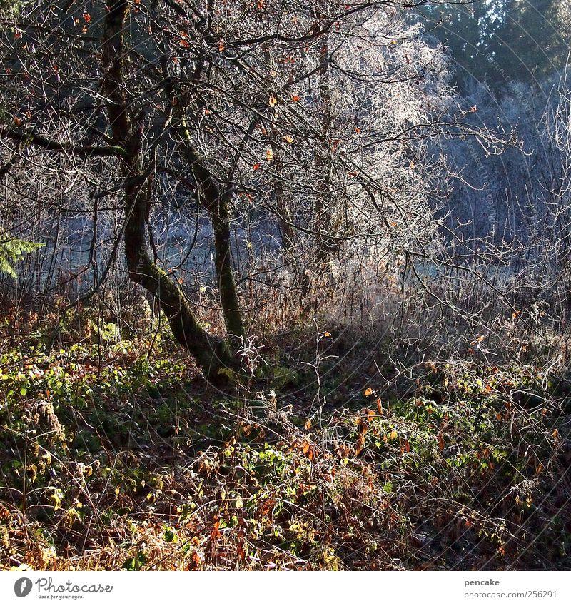 licht trifft dickicht Winter Wald Landschaft Eis Frost Sträucher Optimismus Raureif Auwald