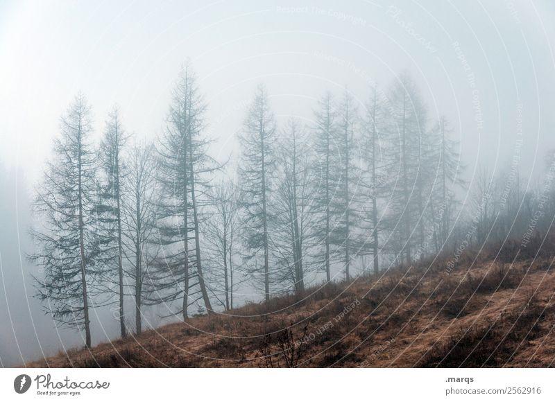 Wettervorhersage Umwelt Natur Landschaft Pflanze Luft Herbst Klima schlechtes Wetter Nebel Baum Wiese dunkel gruselig kalt Stimmung Wandel & Veränderung